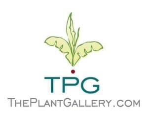 Community Spotlight: The Plant Gallery